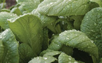 Shocking Evidence of Electrical Signals in Plants