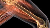 Bone-Inspired Steel Borrows from God's Design