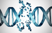 CRISPR-induced Mutations – What do they Mean for Food Safety?