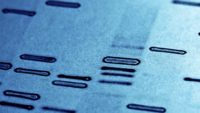 Finding Adam in the Genome: Part 1 of a Response to Chapter 2 (and Chapter 4) of Adam and the Genome