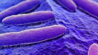 The Design of Giardia and the Genesis of Giardiasis