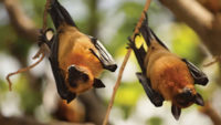 Bats: Equipped for the Hunt