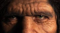 If We Resemble Apes, Does That Mean We Evolved from Apes?