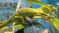 Gecko: Designed to Climb