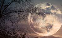 Lunar Water Douses Collision Origin