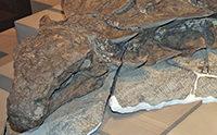 Spectacular Dinosaur Has Skin, Horn, Pigments