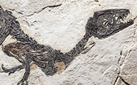 World's Most Catastrophic Extinction