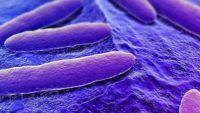 Why We Help: Do Our Microbes Make Us Do It?