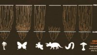 Species, Speciation, and the Genesis Kind