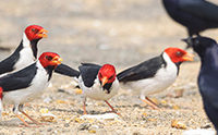 Bird Evolution Story Crash-Lands
