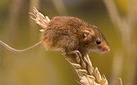 Gene Control in Mice Points Toward Design