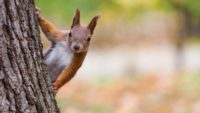 The Not-So-Nutty Habits of Squirrels